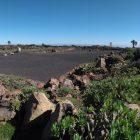 Terreno restaurado