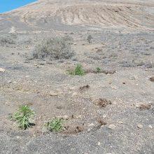 Plantación en la Montaña Blanca