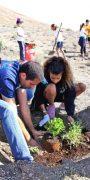 Plantando especies autóctonas